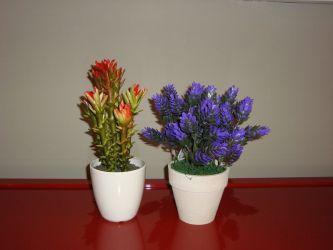 Cactus 1311 y Flor de Pino Morada